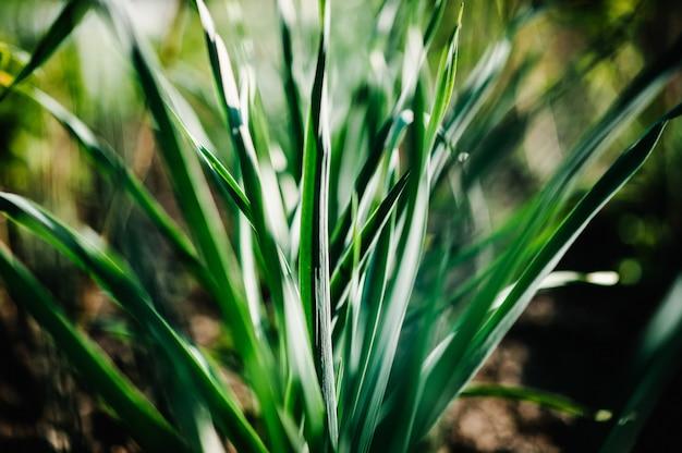 De groene jonge bladeren springen uiinstallaties in aanplanting op.