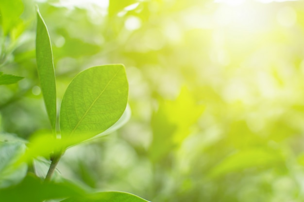 De groene natuur van de meningsclose-up en de zon in de ochtend. mooi achtergrondonduidelijk beeld bokeh