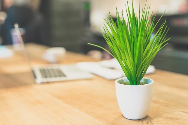 De groene plant bij de laptop op tafel