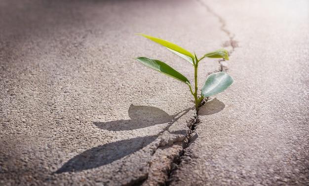 De groene plant groeit uit een scheur in het asfalt