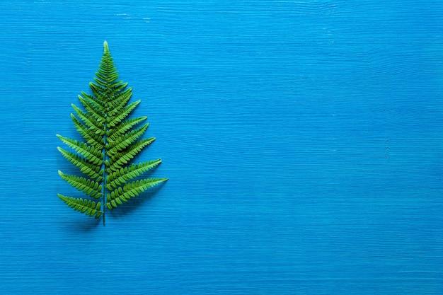De groene tak van de varen ligt op een houten blauw bord