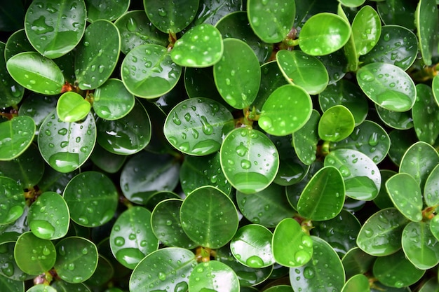 De groene van het de achtergrond textuurontwerp van het bladaard van het de textuurexemplaar van de de specificiteitsverschijnsel schoonheid