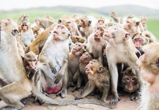 De groep apen wacht en eet hun voedsel over de achtergrond van de onduidelijk beeldberg
