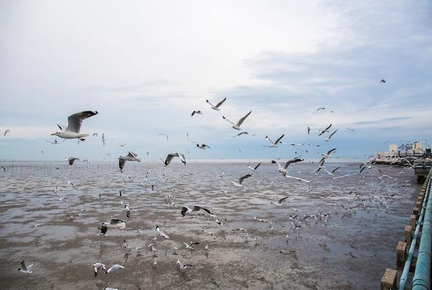 De groep zeemeeuwvogel vliegt.