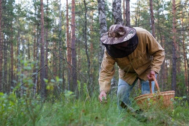 De grootvader verzamelt paddestoelen in het de zomerbos. oude man lopen.
