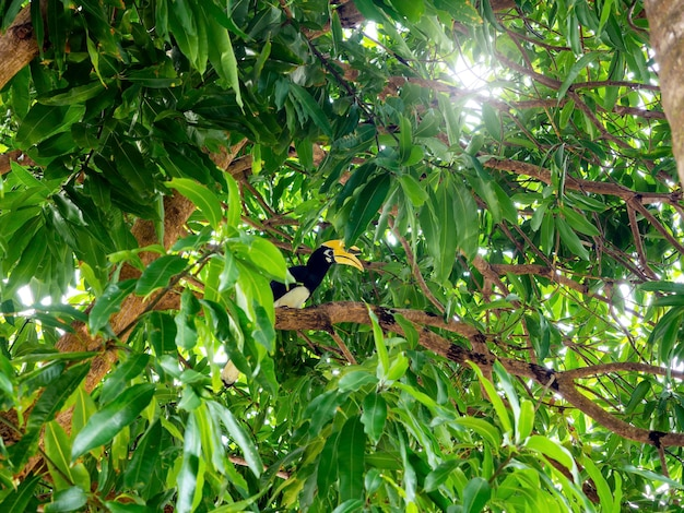 De grote neushoornvogel met gele kop en een grote snavel die op de tak van een boom staat.