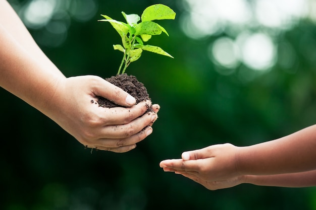 De hand die van de moeder jonge boom aan een kind geeft voor samen het planten