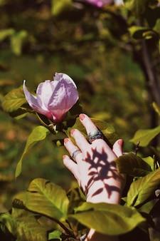 De hand die van de vrouw aan een mooie roze bloem in een bos bereikt