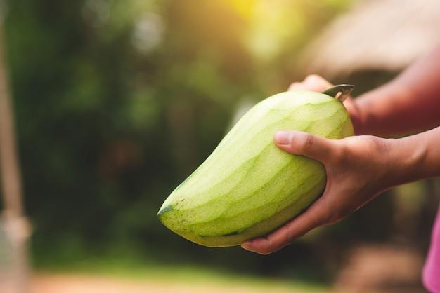 De hand die van de vrouw een mango houdt en knipt.