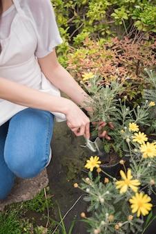 De hand die van de vrouw plant in pot plant