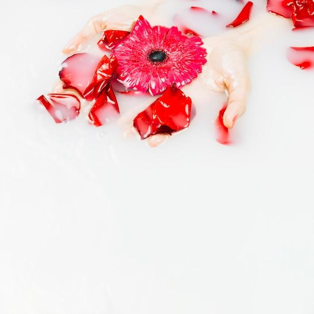 De hand die van de vrouw rode bloem en bloemblaadjes op vloeibare achtergrond houdt