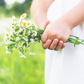 De hand die van een meisje verse witte bloemen houdt