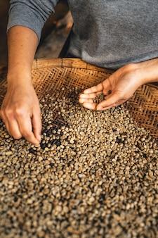 De hand sorteert de koffiebonen voordat ze worden gebrand.