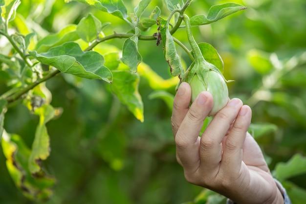De hand van de boer, de vrouw met de groente in haar hand en die van een rijstveld.