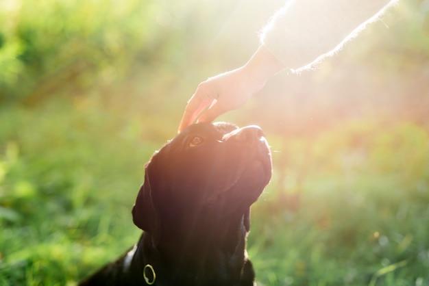 De hand van de eigenaar streelde haar hondhoofd in zonlicht