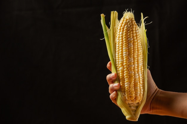 De hand van de maïs