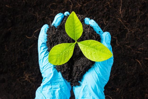 De hand van de vrouw van de onderzoeker draagt rubberen handschoenen die een groeiende en verzorgende boom vasthouden die op vruchtbare zwarte grond groeit