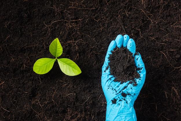 De hand van de vrouw van de onderzoeker draagt rubberen handschoenen met compost vruchtbare zwarte grond voor het kweken en voeden van de boomgroei