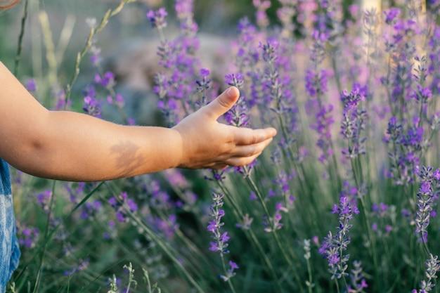 De hand van een klein kind in de zon tussen grote struiken lila lavendel die bloemen aanraakt