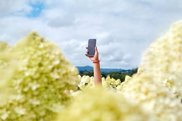 De hand van een onherkenbare persoon die een telefoon vasthoudt die uit een veld met hortensia's gluurt.