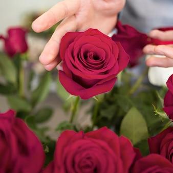 De hand van een persoon die de mooie roze bloem raakt