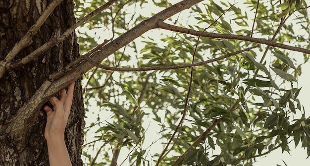 De hand van een persoon raakt een boomtak aan. banner met groene bladeren op het thema van ecologie