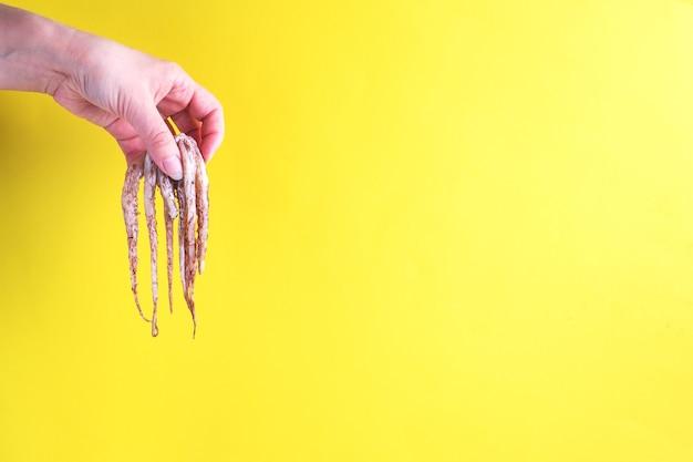De hand van een vrouw houdt de rauwe tentakels van een inktvis vast, de tentakels van een inktvis hangen op een gele achtergrond.