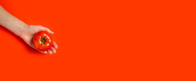 De hand van een vrouw in de palm houdt een rijpe tomaat op een rode achtergrond. bovenaanzicht, plat gelegd. banier. Premium Foto