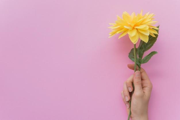 De hand van het gewas met mooie bloem