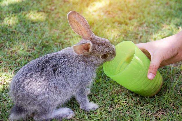 De hand van het jonge geitje voedt het konijn.