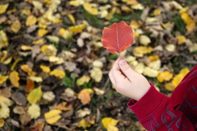 De hand van het kind houdt rood blad op gele gevallen herfstbladeren