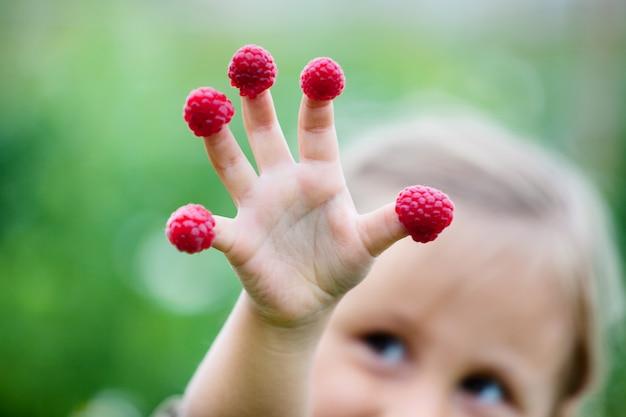 De hand van het kind met framboos