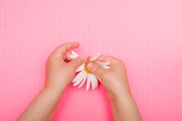 De hand van kinderen scheurt bloemblaadjes af van een kamille bloem roze achtergrond bovenaanzicht kopie ruimte