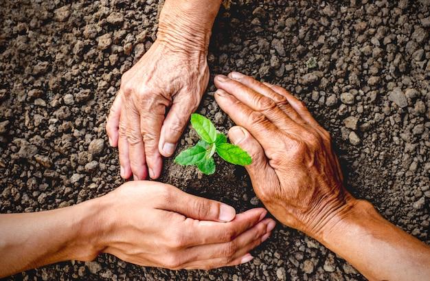 De hand van mannen en kinderen helpt zaailingen in vruchtbare grond te planten.