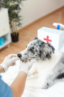 De hand voedende capsules van de vrouwelijke dierenarts aan zieke hond in kliniek