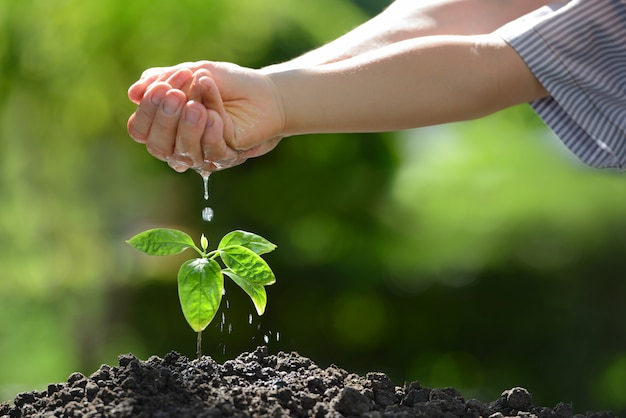 De handen die van kinderen een jonge plant water geven