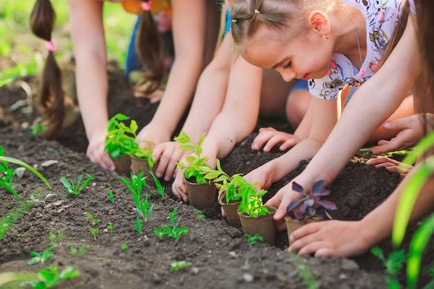 De handen die van kinderen jonge boom planten op zwarte grond samen als wereld