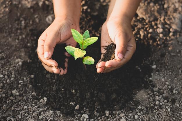 De handen van de kleine jongen planten zaailingen op de droge grond