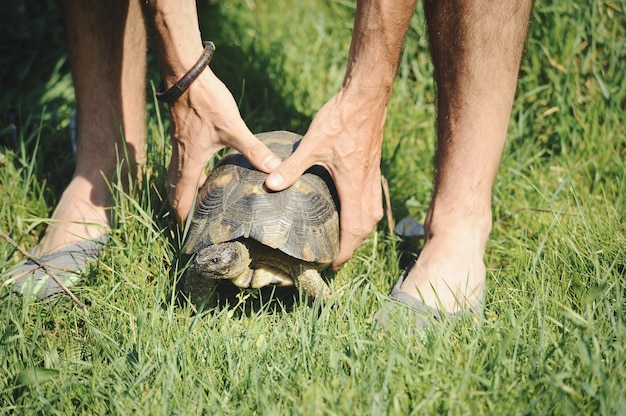 De handen van de mens houden een schildpad vast