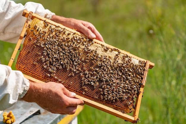 De handen van een man houdt thuis een kader met honingraten voor bijen in de tuin