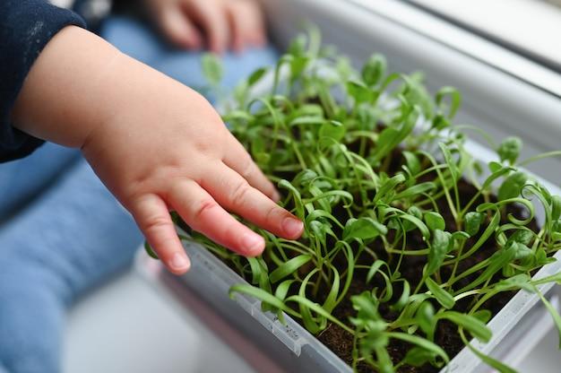 De handen van het kind raken jonge spruiten van een plant