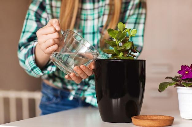 De handen van het meisje waterden houseplant in een zwarte pot thuis, zijaanzicht