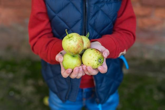 De handen van kid houden een appel vast. herfst. vallen. vrije ruimte