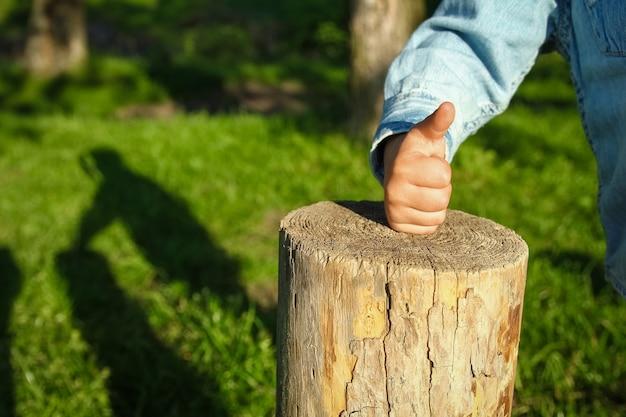 De handen van kinderen houden een boomstronk vast in het park in de natuur