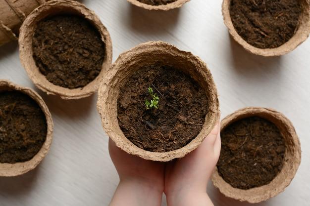 De handen van kinderen houden een pot met zaailingen vast