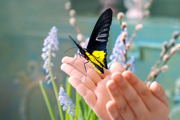 De handen van kinderen houden een prachtige vlinder in het zonlicht