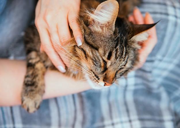De handen van vrouwen houden een donzige kat vast. de eigenaar aait de kat. verzorging en onderhoud van huisdieren.