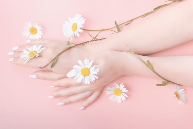 De handen van vrouwen in een elegante positie op een roze achtergrond met kamille bloemen