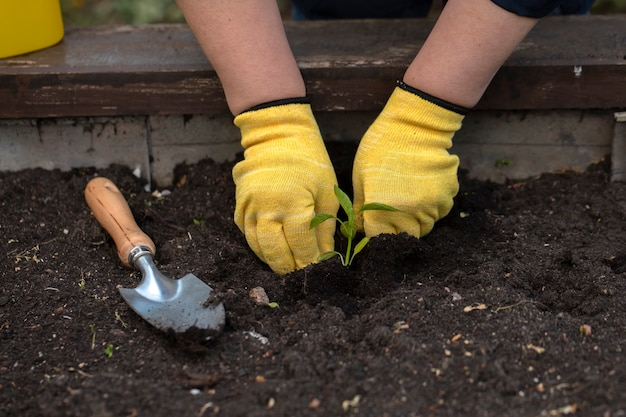 De handen van vrouwen in gele handschoenen planten bloemen in de bodem