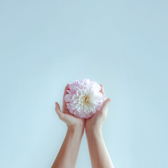 De handen van vrouwen strekken delicate bloemen uit.